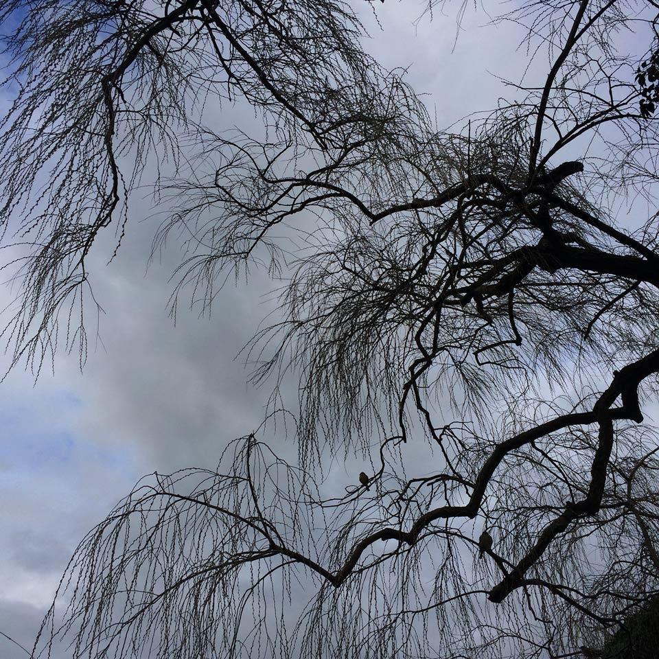 arbre aux oiseaux, dans le parc de la Perle du Lac à Genève